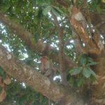 Ecological tour to Kakkayam, Janakikkadu 10