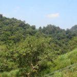 Ecological tour to Kakkayam, Janakikkadu 4